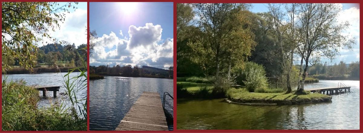 Eine Collage mit verschiedene Perspektiven auf den Dietlhofer See bei Weiheim. links der Blick durch´s Schilf auf den See mit einem kleinen Steg, in der Mitte ein Steg mit Leiter ins Wasser und blauer Himmel mit weißen wolken und Sonne. Rechts eine kleine grüne Halbinsel im Wasser, auf der drei Birken stehen. von dort führt wieder ein Steg ins Wasser