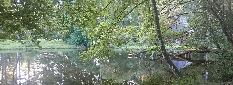 Landschaftsbild ein Teich im Hintergrund durch das grüne Laub ein Japanischer Pavillion mit schwarzem spitz zulaufendem Dach und roten Säulen. Im Vordergrund steht ein gekrümmter Baum. Alles ist grün und die Wasseroberfläche spiegelt die Bäume wieder